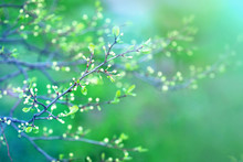 Delicate Spring Toned Image Of...