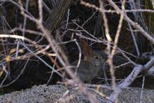 Rabbit Hiding In The Bush