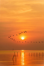 Flock Of Seagulls Bird Flying In A Line Through The Bright Yellow Sun On Orange Light Sky And Sunlight Reflect The Water Of The Sea Beautiful Nature Landscape At Sunrise, Sunset Background, Thailand
