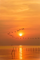 Fototapeta Do jadalni Flock of seagulls bird flying in a line through the bright yellow sun on orange light sky and sunlight reflect the water of the sea beautiful nature landscape at sunrise, sunset background, Thailand