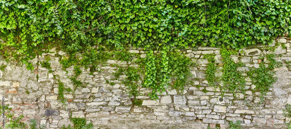 Fototapeta Beautiful overgrown castle wall in poster size