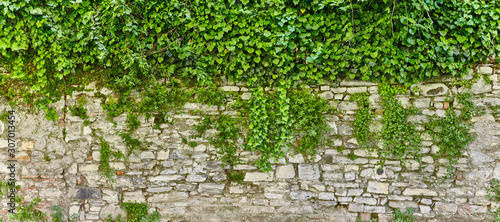 Beautiful overgrown castle wall in poster size