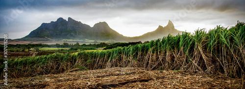 Fotografia Sugar cane fields at sunset, near Les Trois Mamelles, Mauritius