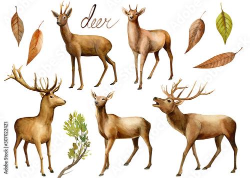 zwierzeta-lesne-jelen-akwarela-ilustracja