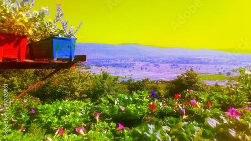 Foto auf Leinwand Gelb flowers in watering can