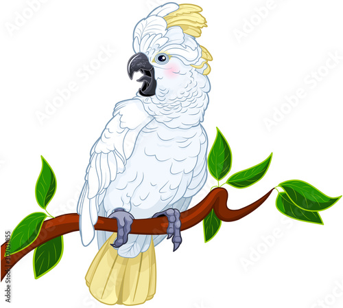 Canvas Prints Fairytale World Cockatoo