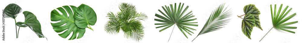 Fototapeta Set of green tropical leaves on white background