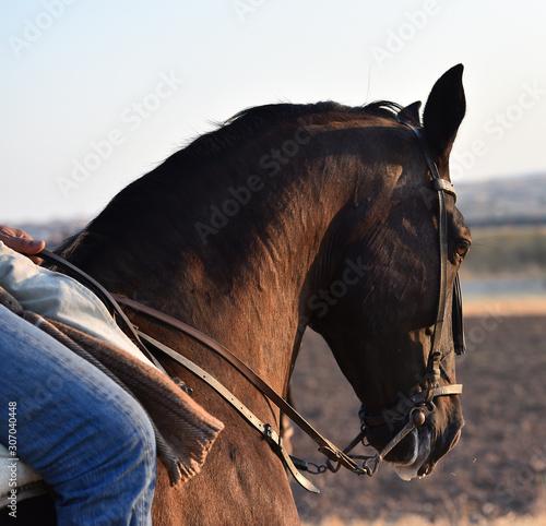 Fotografia caballo español
