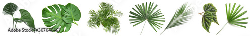 Foto Set of green tropical leaves on white background