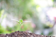 small growing green plant with sunlight bokeh