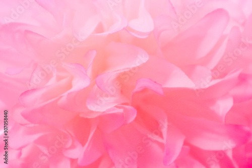 Beautiful abstract color pink and white flowers background and pink flower frame and white and pink leaves texture background