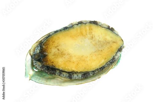 Photo fresh raw abalone isolated on white background