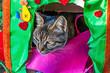canvas print picture - close up cute friends cats in nature