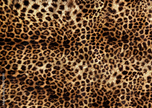 Poster Leopard brown natural leopard skin pattern