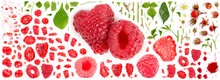 Raspberry Collection Abstract