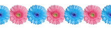 Blue And Pink Gerbera Flowers ...