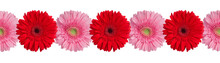 Red And Pink Gerbera Flowers B...