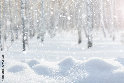 Snowfall in the forest against the background of birches. - 307086668