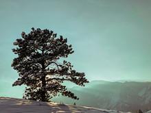 Tree Against Blue Sky In Winter