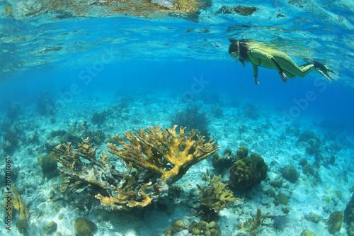 Fototapety, obrazy: Female snorkeler and Elkhorn coral