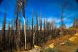 Waldsterben nach dem Brand im Yosemite Nationalpark