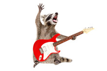 Funny Singing Raccoon With Ele...