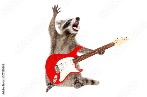Fototapety, obrazy: Funny singing raccoon with electric guitar isolated on white background