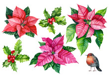 Set Of Red Holly Berries, Robin Bird, Poinsettia Flower On An Isolated White Background. Watercolor Illustration, Botanical Painting. Christmas Plant.
