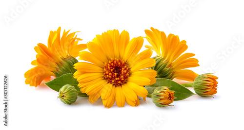 Obraz Calendula. Flowers with leaves isolated on white background. - fototapety do salonu