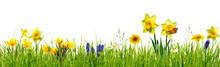 Freigestellte Frühlingswiese Auf Weiß
