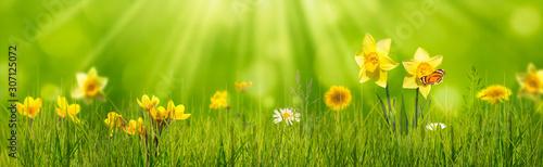 frühlingswiese im sonnenschein