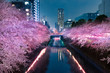 canvas print picture - 目黒川の夜桜