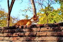 Cat On The Bricks Wall.