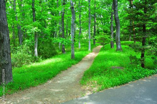 美しい散歩道 丘陵 雑木林