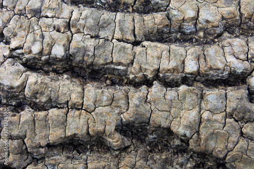 The bark of a forest tree in approximation Canvas Print