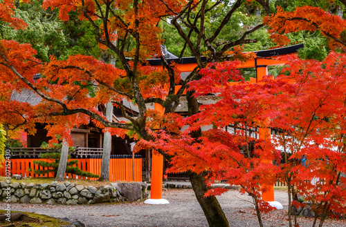 Canvas Prints Cuban Red Foliage landscape in Kyoto, Japan.