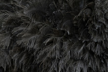 Ostrich Feathers Skin For Patt...