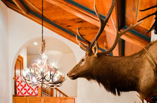 An Elk Head Mounted On A Wall In A Mansion