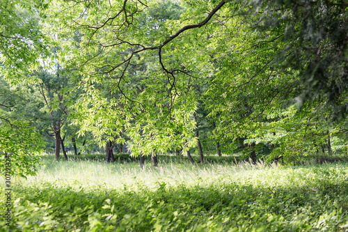 Fotografie, Tablou 新緑の季節
