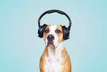 Dog In Noise Cancelling Headph...
