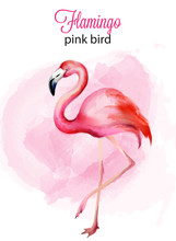 Watercolor Flamingo Pink Bird Portrait With Background. Vector