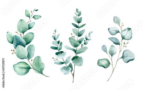 Watercolor hand painted botanical illustration Wallpaper Mural