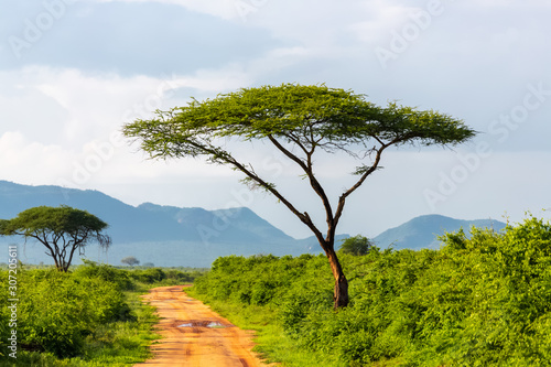 tree and road in national park, kenya