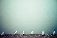 Row Of Six Seagulls In Front O...