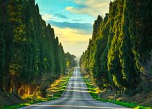 Bolgheri Famous Cypresses Tree...