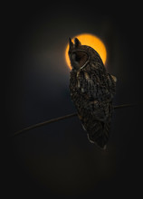 Brown And Gray Owl Perching On Branch