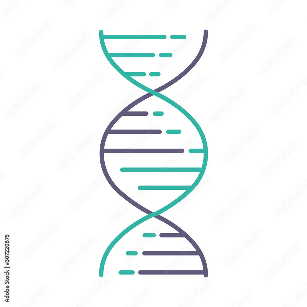 Fototapeta DNA double helix violet and turquoise color icon. Deoxyribonucleic, nucleic acid structure. Spiraling strands. Chromosome. Molecular biology. Genetic code. Genome. Isolated vector illustration
