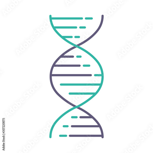 Obraz DNA double helix violet and turquoise color icon. Deoxyribonucleic, nucleic acid structure. Spiraling strands. Chromosome. Molecular biology. Genetic code. Genome. Isolated vector illustration - fototapety do salonu