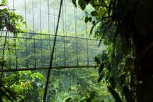 Canopy In Cloud Forest Of Cost...