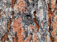 Close Up Of Tree Bark And Knot...